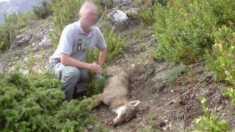 Le 51ème loup vient d'être abattu