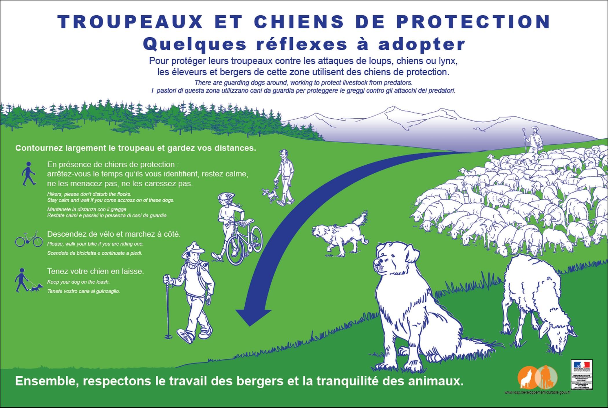 En cas de rencontre avec un troupeau et des chiens de protection : adoptez les bons gestes !