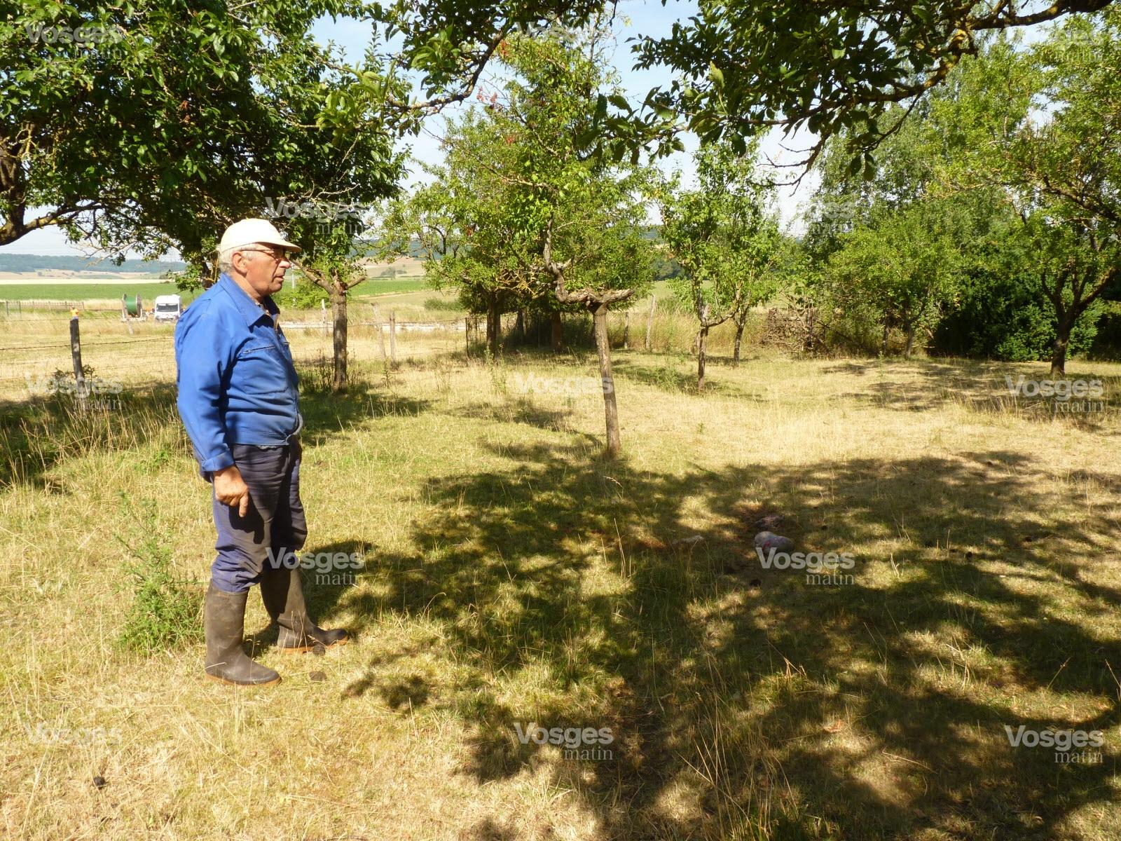 Edition de La Plaine | Photos. Punerot : le loup a attaqué la nuit dernière près des habitations