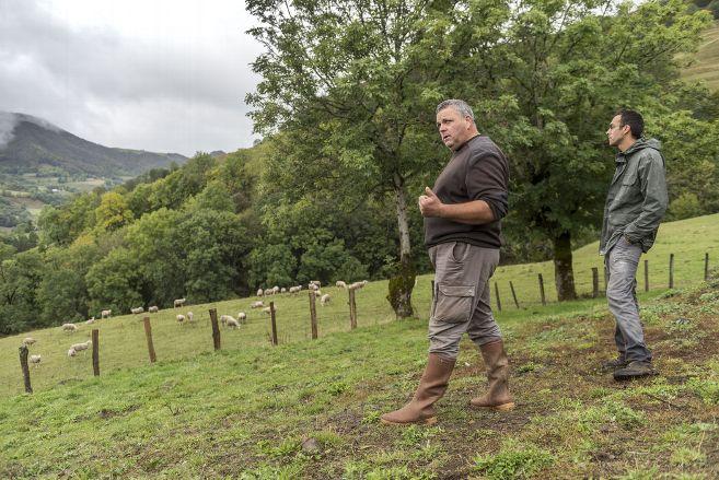 Onze brebis tuées sur une exploitation du Cantal : un éleveur suspecte une attaque de loup – Mandailles-Saint-Julien (15590) – La Montagne