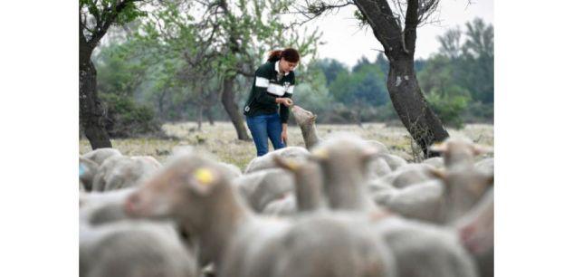 A l'école des bergers, des élèves passionnés, sûrs de trouver un emploi