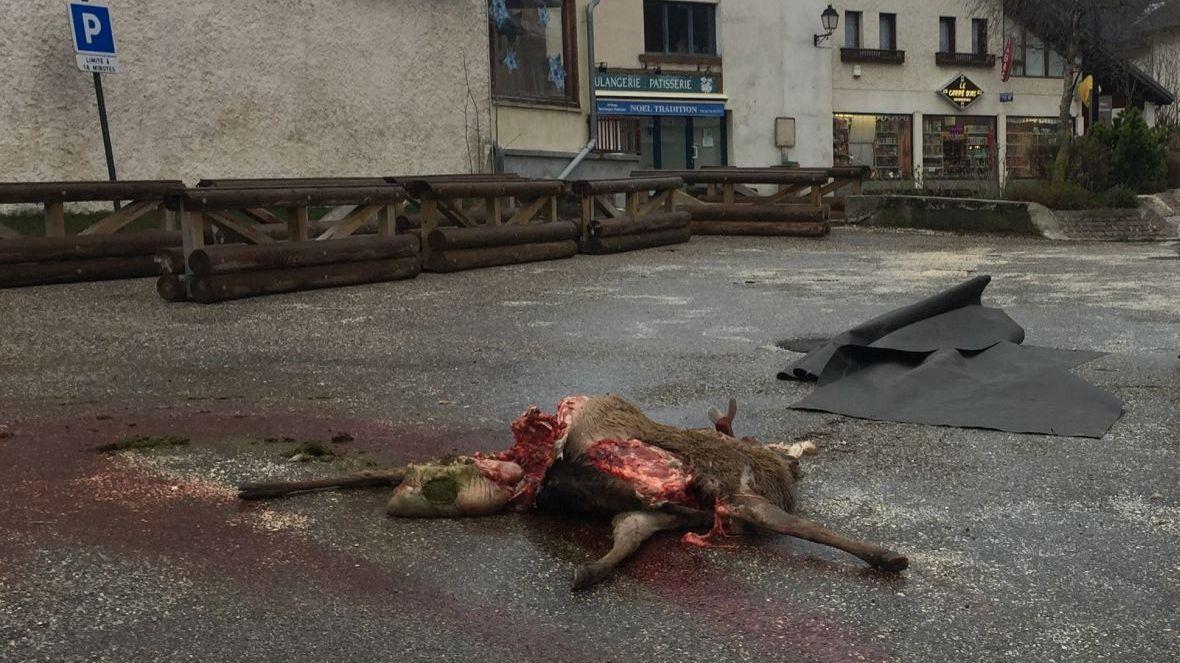 PHOTOS. Un loup dévore un cerf en plein centre du village à Corrençon-en-Vercors (Isère) – France 3 Auvergne-Rhône-Alpes