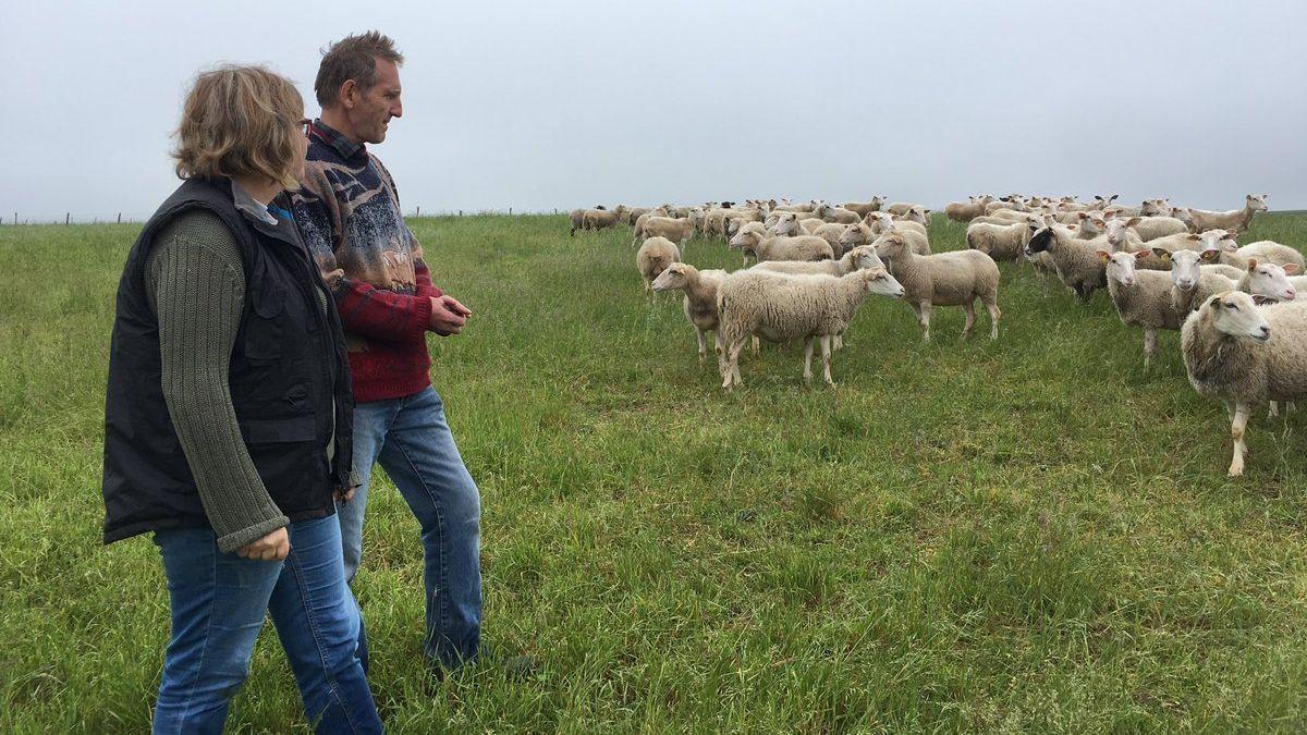 Aube : une nouvelle attaque du loup à Villiers-le-Bois ? – France 3 Grand Est