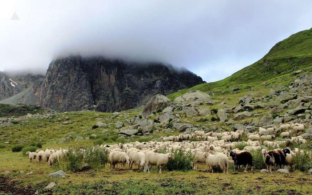 Ours et loup dans les Pyrénées-Atlantiques: indemnisation pour 106 animaux – La République des Pyrénées.fr