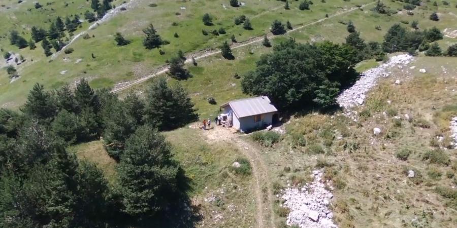 Hautes-Alpes-Drôme : à Lus-la-Croix-Haute, un berger filme le loup afin d'analyser le travail des chiens de protection | D!CI TV & Radio