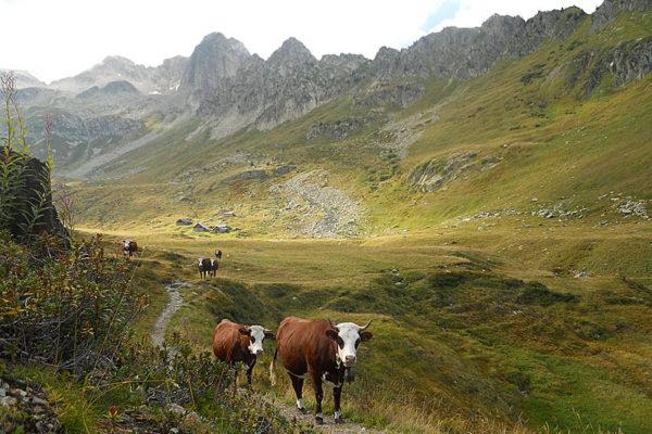 St Alban - Alpage du Bacheux en Maurienne - CP J Dupenloup