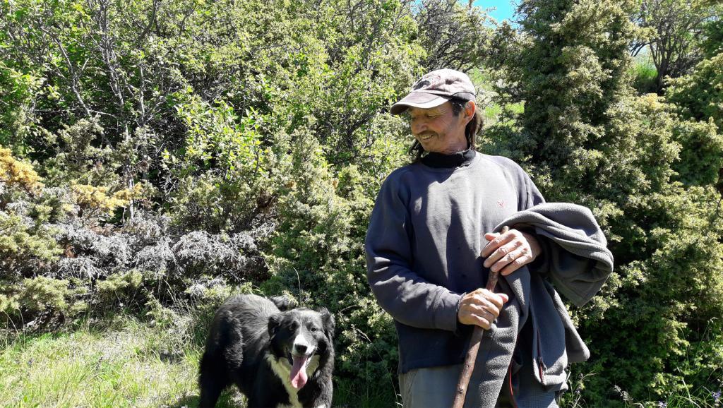 Comment cohabiter avec le loup? Dans les Hautes-Alpes, les bergers cherchent des solutions – RFI