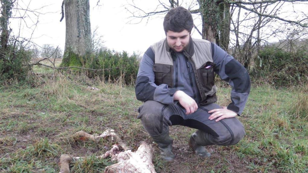 Brebis attaquées : le loup en sud Vienne ?