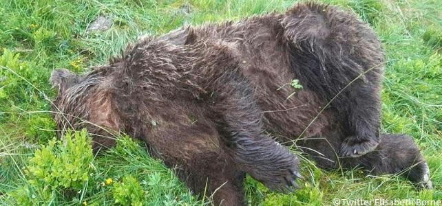 Farid Benhammou: «Il règne un sentiment d'impunité pour les anti-ours»