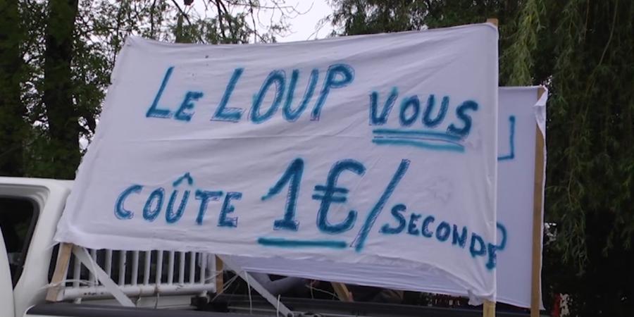 Hautes-Alpes : Le comité loup «n'a pas permis d'avancées» selon Lionel Marin, agriculteur et membre de la chambre d'agriculture | D!CI TV & Radio