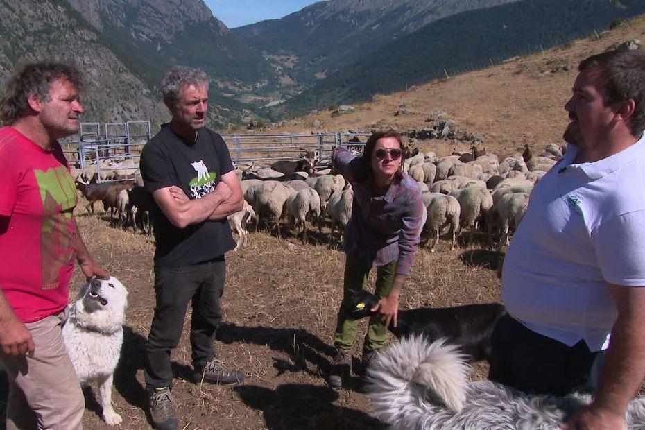 Loup dans les Alpes : Maploup, l'application qui cartographie en temps réel les attaques du prédateur
