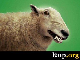 Le loup et les activités d'élevage : comparaison européenne dans le cadre du plan national d'actions 2018/2023.